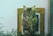 Nuestros Clientes / Aquí podéis ver fotos de los estupendos felinos que vienen a visitarnos.