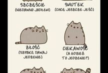 Cats and other sweet stuff