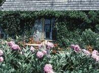 Old Lady Weas: cottage garden