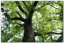 Trees / Collection of interesting trees