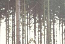 Waldshooting
