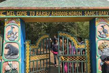 Barsey Rhododendron Sanctuary / http://krishnandusarkar.com/trekking-barsey-rhododendron-sanctuary/