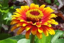 July flowers / Flowers blooming at Lilies and Lavender in July / by Laughing Lady Flower Farm