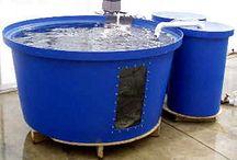 Aquaculture and Aquaponics