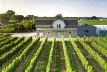 Niagara Region Wine / 0