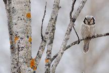 I'll love Owls