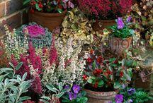 konténeres növények