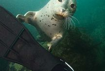 Spearfishing & free diving.