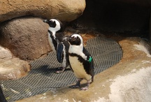 Penguin Love / by Judi Bridges