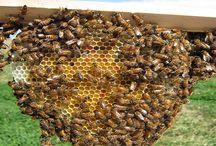 pszczelarskie sprawy