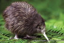 Voyage en Nouvelle Zélande / Les plus belles photos de Nouvelle Zélande