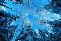 Winter Wonderland / by Cat