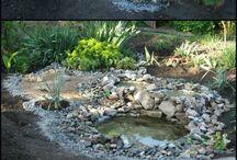ogród / projekty, inspiracje, rośliny