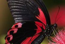 Butterfly / by Kézia Pereira Do Lago