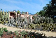 Succulents and cactus / Gardens of succulents and cactus