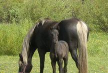 Horse World / Beautiful horses of all breeds  / by Patti Calhoun