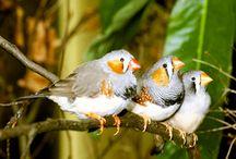vida de passarinho