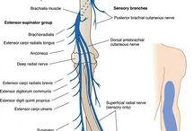 nerwy i miesnie