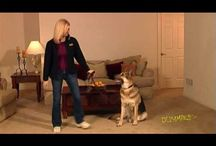Pup Training / by Jon Jensen