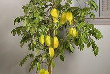 Plantas de Varanda