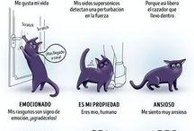Gatos curiosos