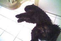Ozzie / The life of a Bouvier