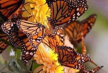 Save the Bees & Butterflies! / Appreciate and Protect our Bees & Butterflies
