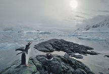 I <3 penguins / by Carolyn Pool