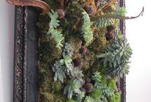 vetplanten decoratirs