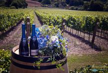 Editorial - Hambledon Vineyard