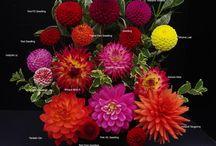 Flowers / by Dayna Hayward Tomlin