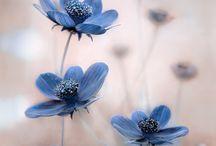 Alce flores azuis