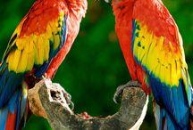 Amazonia Inspiration