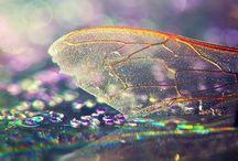 Fairytale  / by Marney Elizebeth