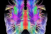 Brain / Images of brain