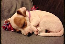 Puppies :*