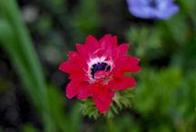 My garden / Mon jardin, mes fleurs , mes arbres, mes rêves et mes photos  avec :)