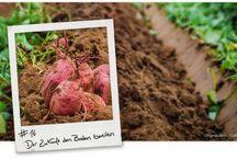 Boden / Hier geht es verschiedene Gartenböden und Erde.