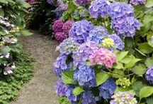 fotos jardin plentzia