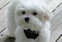 τα αγαπημένα τα καλιτερα σκυλακια