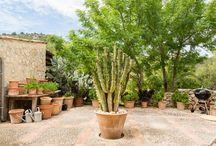 cactus garden area