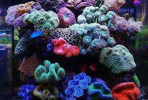 Reef Tank Nano