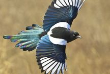 Birds of Europe / Birds we saw in Europe in April 2015