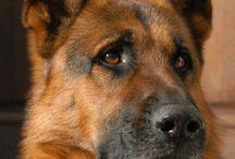 Il migliore amico dell'uomo...il cane