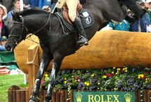 Riding & Horses