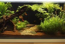 Planted Display Tank / Our new planted display, based on a Fluval Fresh F90 129L aquarium.
