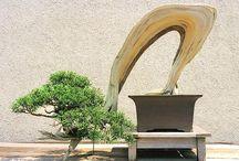 Bonsai / My favorites bonsai from the web