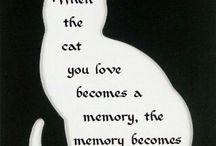 Воспоминания
