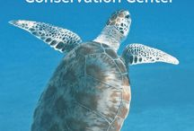 Florida Conservation and Technology Center and the Suncoast Youth Conservation Center / Suncoast Youth Conservation Center #LoveFL #LoveSouthShoreFL #ApolloBeach #SeaTurtle