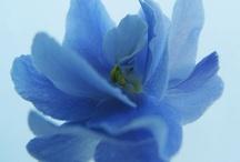 Flores azules y violetas / by Janett Diaz